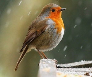 bird, nature, and snow image