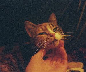 cat, film, and cute image