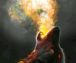 fire and wolves image