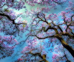 blossom, pretty, and flowers image