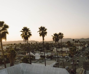 palm trees, palms, and theme image