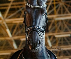 black, equestrian, and georgeous image