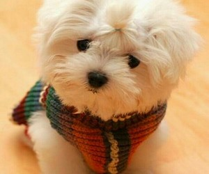 puppy, cute, and small image