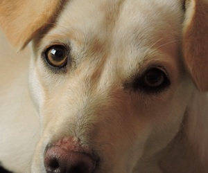 dog, fotografia, and photo image