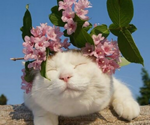 cat, flowers, and cute image