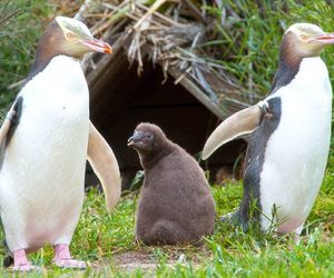 family and penguin image