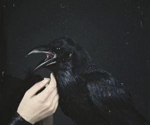 black, dark, and crow image