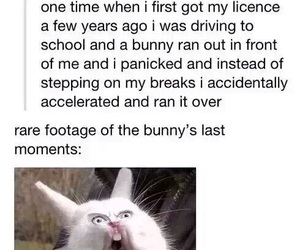 funny, bunny, and car image