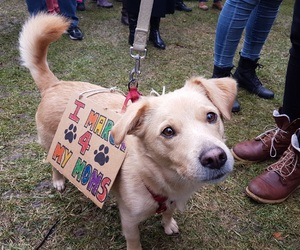 women's march, dog, and feminism image