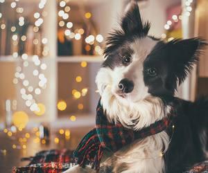 dog, lights, and pets image