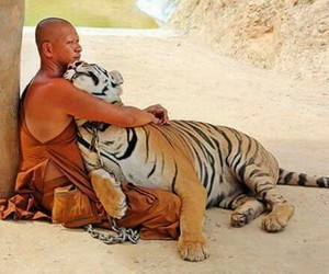 tiger, animal, and friendship image