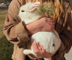rabbit, animal, and cute image