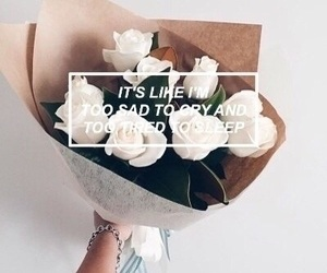 quotes, white roses, and roses image