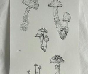 draw, nature, and fungi image