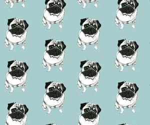 wallpaper, dog, and pug image