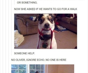 dog, funny, and animals image