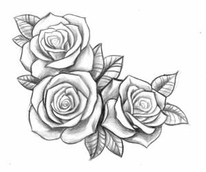 drawing, flowers, and roses image