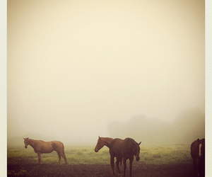 horses and mist image