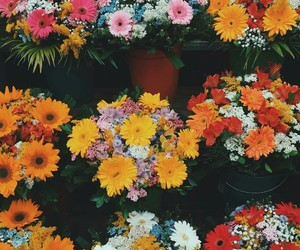 beautiful, flower, and petal image