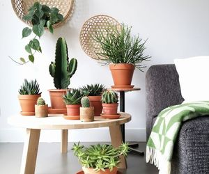 plants, fresh, and green image