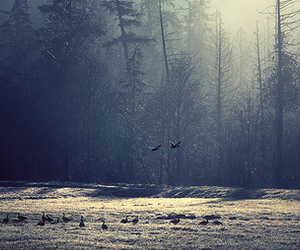 bird, forest, and photo image