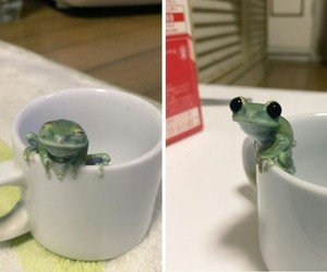 frog and cute image
