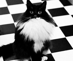 cat, black and white, and kitty image
