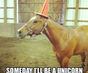 unicorn, horse, and funny image