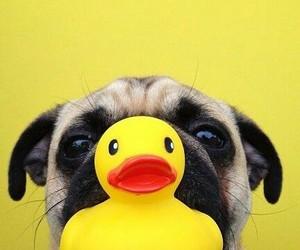 pug, dog, and animal image