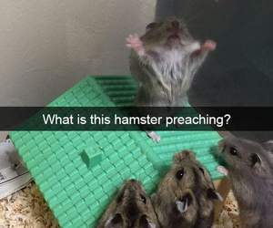 hamster, animal, and humor image