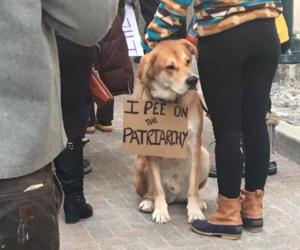 dog, feminism, and feminist image