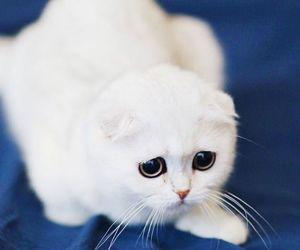 cat, eyes, and grey image