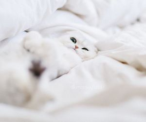 cat, eyes, and flat image