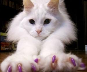 beautiful, power, and white kitten image