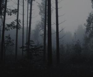 creepy, gloomy, and misty image