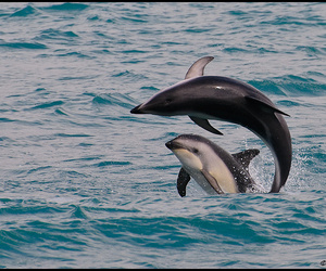 animals, sea, and dolphine image