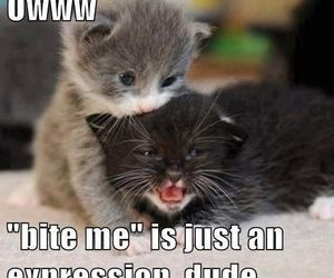 cat, kitty, and funny image