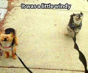 dogs, funny, and wind image