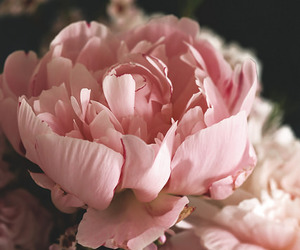 flowers, indie, and pale pink image