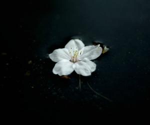 flowers, alternative, and indie image