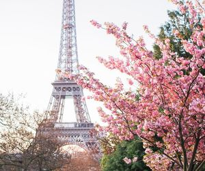 paris, spring, and pink image