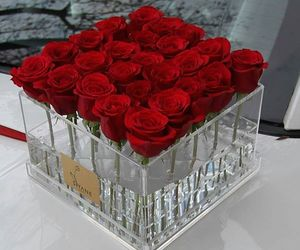 beautiful, red, and roses image