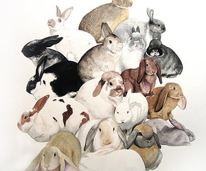 rabbit and bunny image
