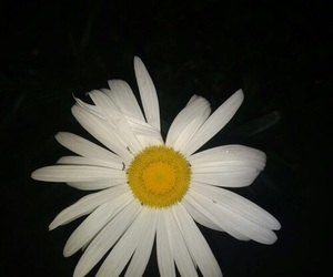 dark and flower image