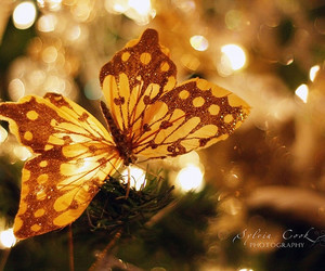butterfly, christmas, and flowers image