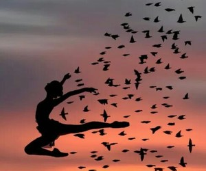 bird, sunset, and dance image