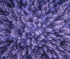 photography and purple image