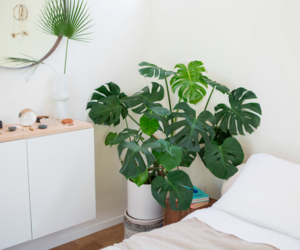 aesthetic, bedroom, and green image