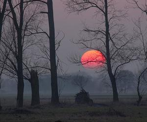 moon, sunset, and photography image