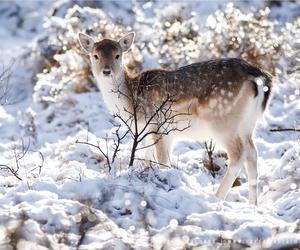 animal, snow, and deer image